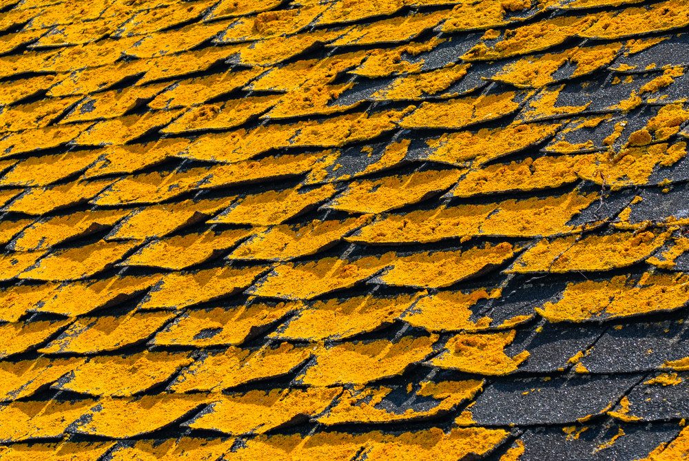 Algae Frost Roofing 855 853 7678 Siding Gutters Indiana